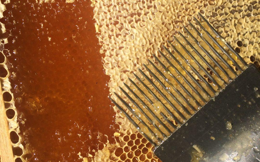 Flüssiger oder cremiger Honig?